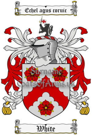 White (Ireland) Coat of Arms Family Crest PNG Image Instant Download